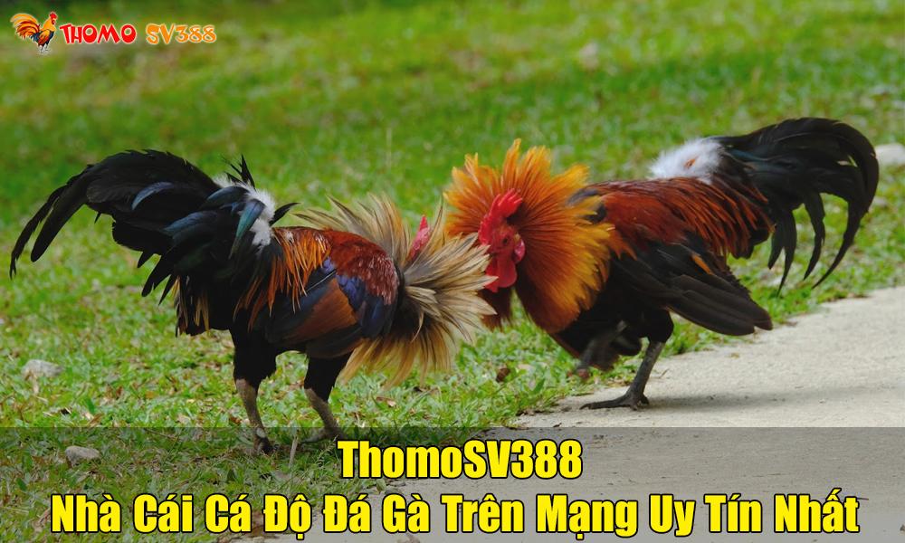 Giới Thiệu ThomoSV388 Là Gì?